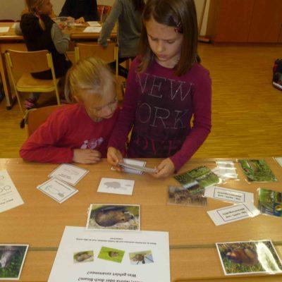 Im Klassenzimmer erfuhren die Kinder Wissenswertes über den Biber.