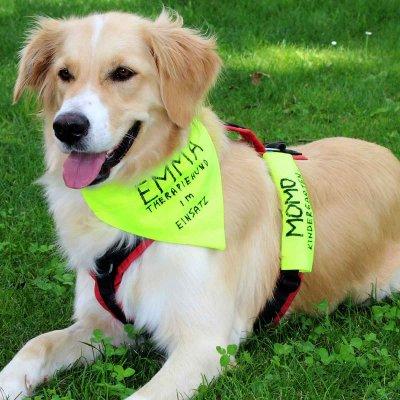 Emma arbeitet seit September als Therapiehund im AWO Kindergarten Momo in Rosenheim. Foto: AWO Kindergarten Momo.